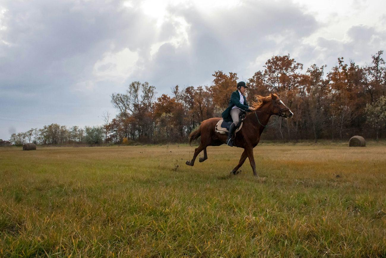 Horse Horse Riding Galopp Sun Light
