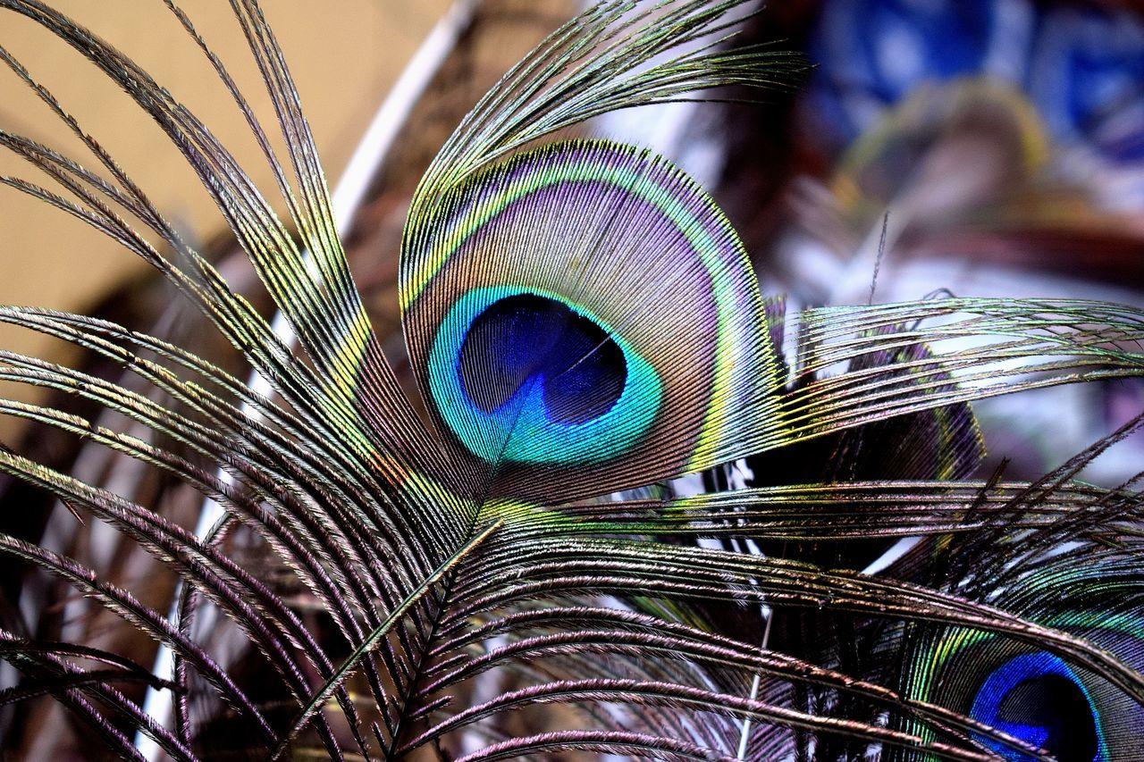 Close-up Of Multi Colored Feathers