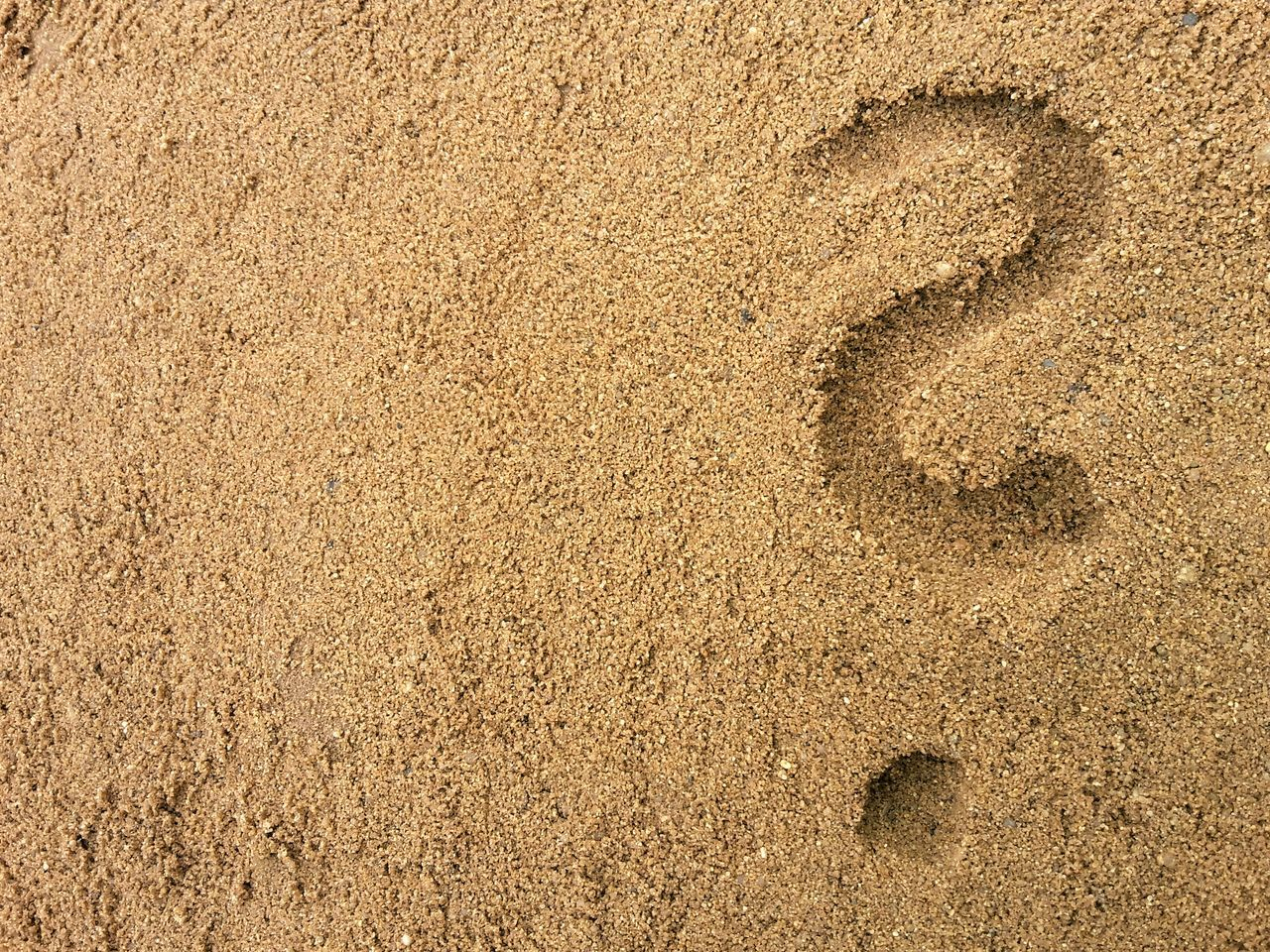 question mark in the sand Backgrounds Full Frame Textured  Gold Colored No People Close-up Sand Day Outdoors Neg Space Copy Space Sand Beach Travel Vacation Question Mark Clueless Drawn Where To Go? Where To Go For Vacation Copy Space Negative Space Neg Space Symbol nature. Sunshine. Summer