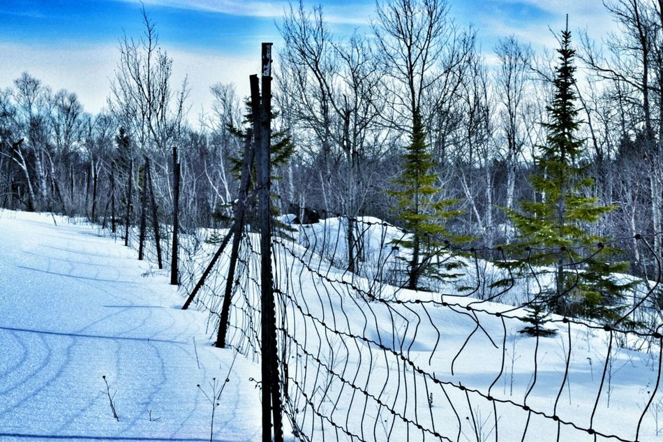 Taking Photos Fencelines Follow #f4f #followme #TagsForLikes #TFLers #followforfollow #follow4follow #teamfollowback #followher #followbackteam #followh Woodlands Enjoying Life Winter_collection Eye4photography  Winterscapes Wisconsin Winter Winter Wonderland Taking Photos Icecold Roadsidephotography Nature Taking Over Decay_nation Decay All_shots