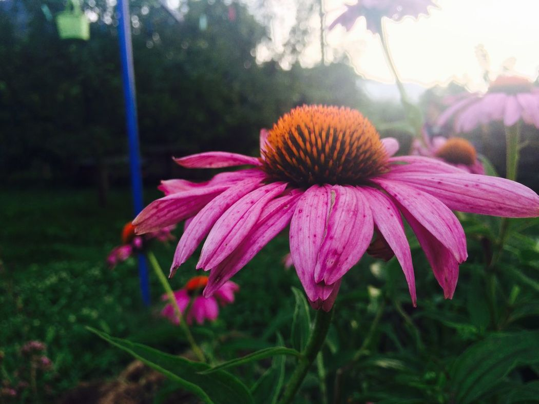 Flowers Nice Hello World Hi! Relaxing Taking Photos Enjoying Life Hanging Out Relaxing EyeEm Sun Nature IPhoneography Taking Photos Photography Check This Out EyeEm Nature Lover Urban Spring Fever Beautiful Green Fun Love It EyeEm Best Shots In
