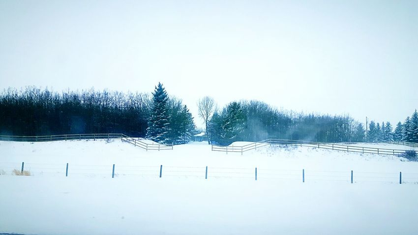 Sky No People Outdoors Nature Day Cold Temperature Window Wintertime Winter Snow Tree Fence Spruce Trees Winter Wonderland