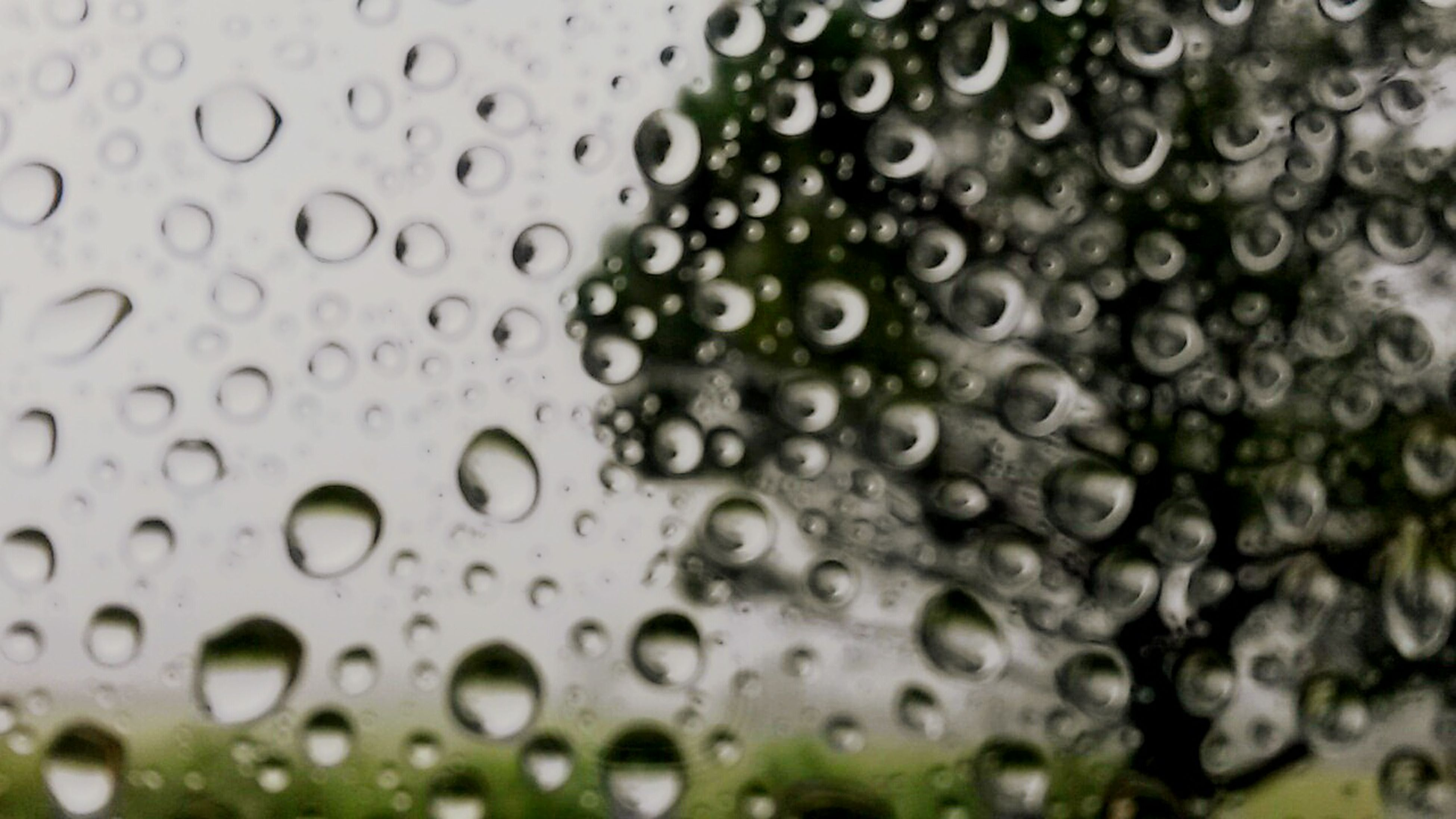 drop, wet, water, rain, full frame, backgrounds, transparent, raindrop, window, glass - material, close-up, focus on foreground, weather, indoors, freshness, water drop, droplet, nature, glass, season