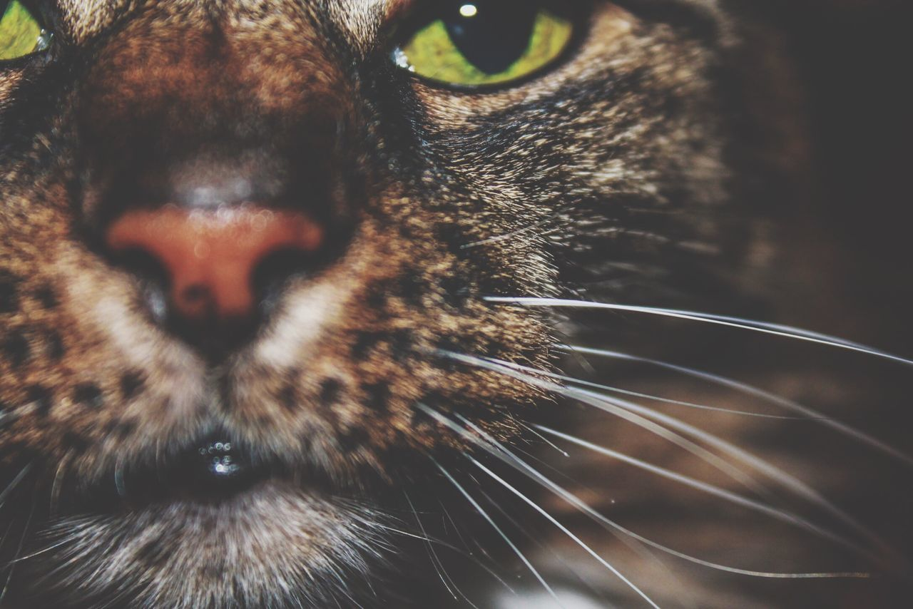 Domestic Cat Domestic Animals One Animal Animal Themes Mammal Close-up Whisker No People Pets Nature Feline Outdoors Angry Day Cat
