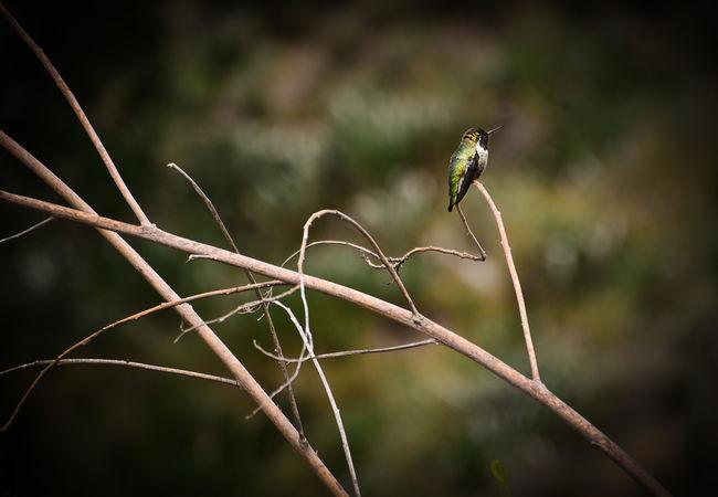 ummmmm Humingbirds Hummingbird Humingbirdmoth Babyhumingbirds Check This Out EyeEm Birds Wonderful Birdporn Birds_collection Eye Em Nature Lover