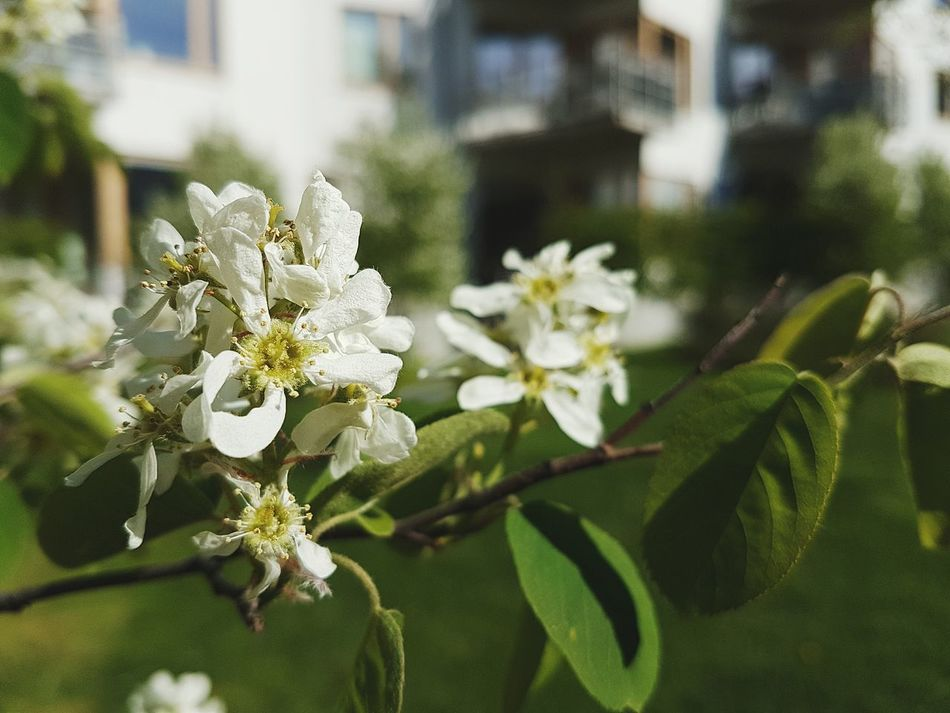 One of the first shots with my new Samsung Galaxy S7 Edge and im impressed by the image quality! Outperformes my old iPhone 6 by far. Samsung Galaxy S7 Edge Samsung Samsungphotography Nature_collection Flowers Trees EyeEm Nature Lover The Essence Of Summer