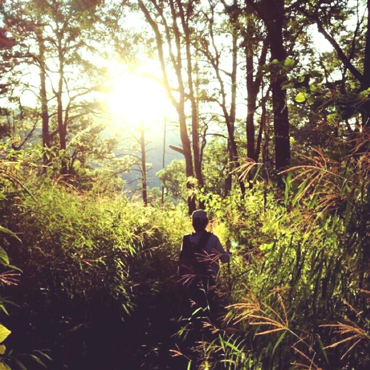 RePicture Leadership Trekking Mountain Doi Luang Doi Luang, Chiang Dao Chiang Dao Chiang Mai Thailand