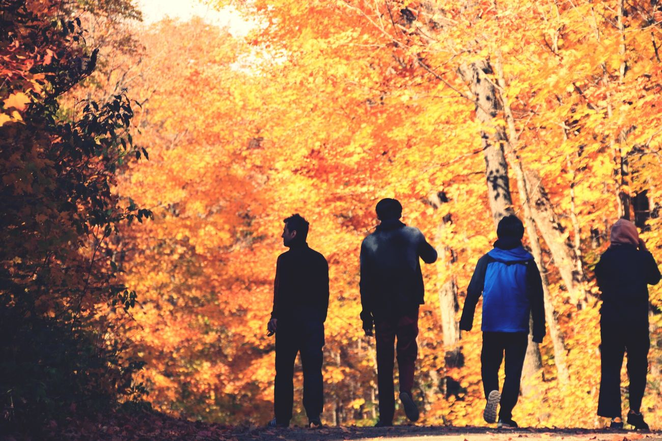 Yellow Tree Orange Color Outdoors Men Non-urban Scene Tranquil Scene Forest Mountain Nature Leaves Autumn Standing Person Vibrant Color Tranquility Standing Toronto Canada Portrait Silhouette Landscape Algonquinprovincialpark Multi Colored Footpath