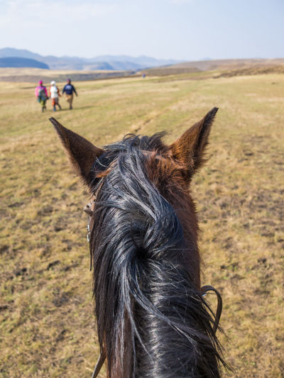 Mountain Range Mountain Scenery Landscape African Africa Basuto Nature Horse Riding Horse Lesotho Point Of View POV