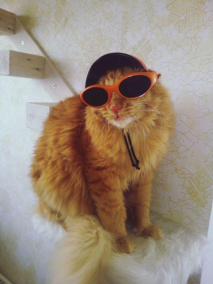 кот Пиксель Cat Catinsunglasses