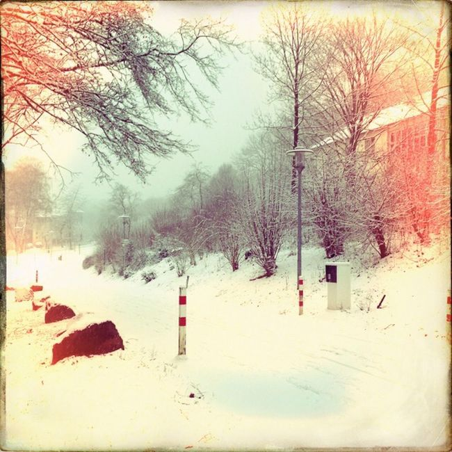 Taking Photos EyeEm Best Shots EyeEm White Snow Winter EyeEm Nature Lover