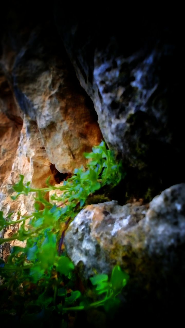 rock - object, nature, moss, no people, green color, tranquility, beauty in nature, cave, day, close-up, outdoors