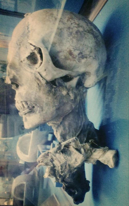 Чья-то симпатичная голова HEAD History Mummy Historical Museum Historical Stranger Мумия ИсторическийМузей Scary