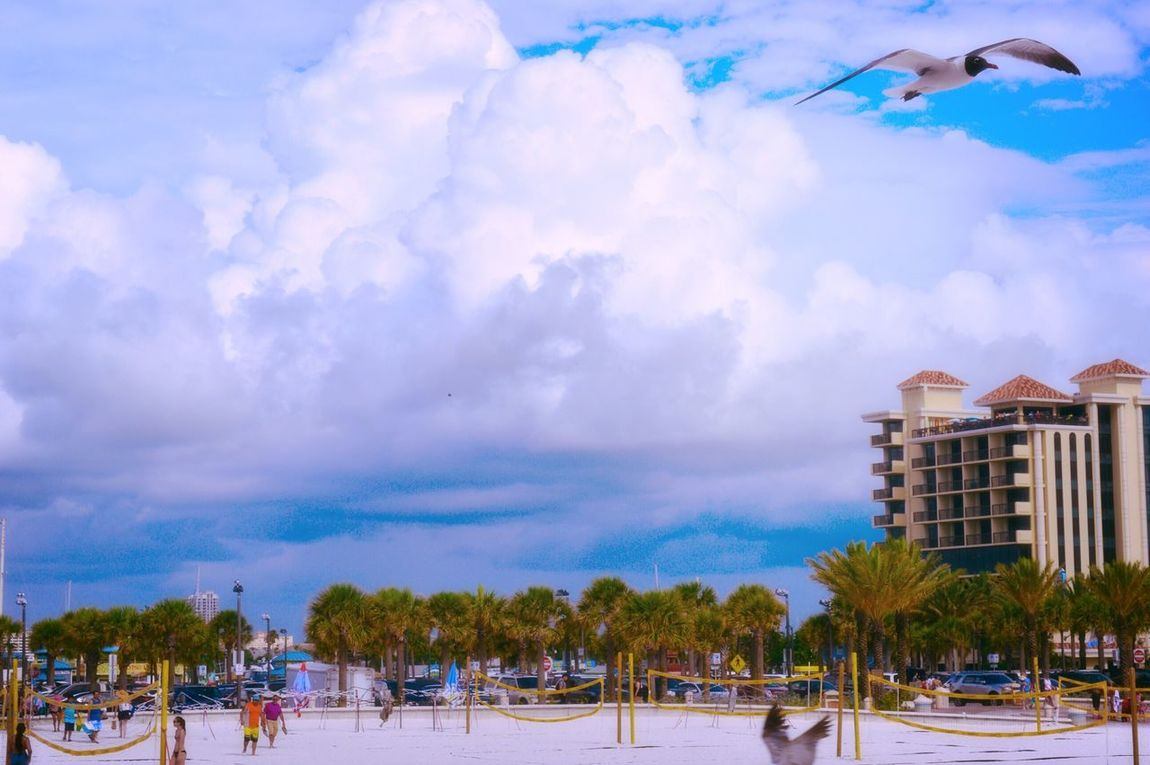Clearwater beach Florida Building Exterior Built Structure Tree Sky Architecture Cloud - Sky City Outdoors Nature Growth Day No People Beauty In Nature Cityscape