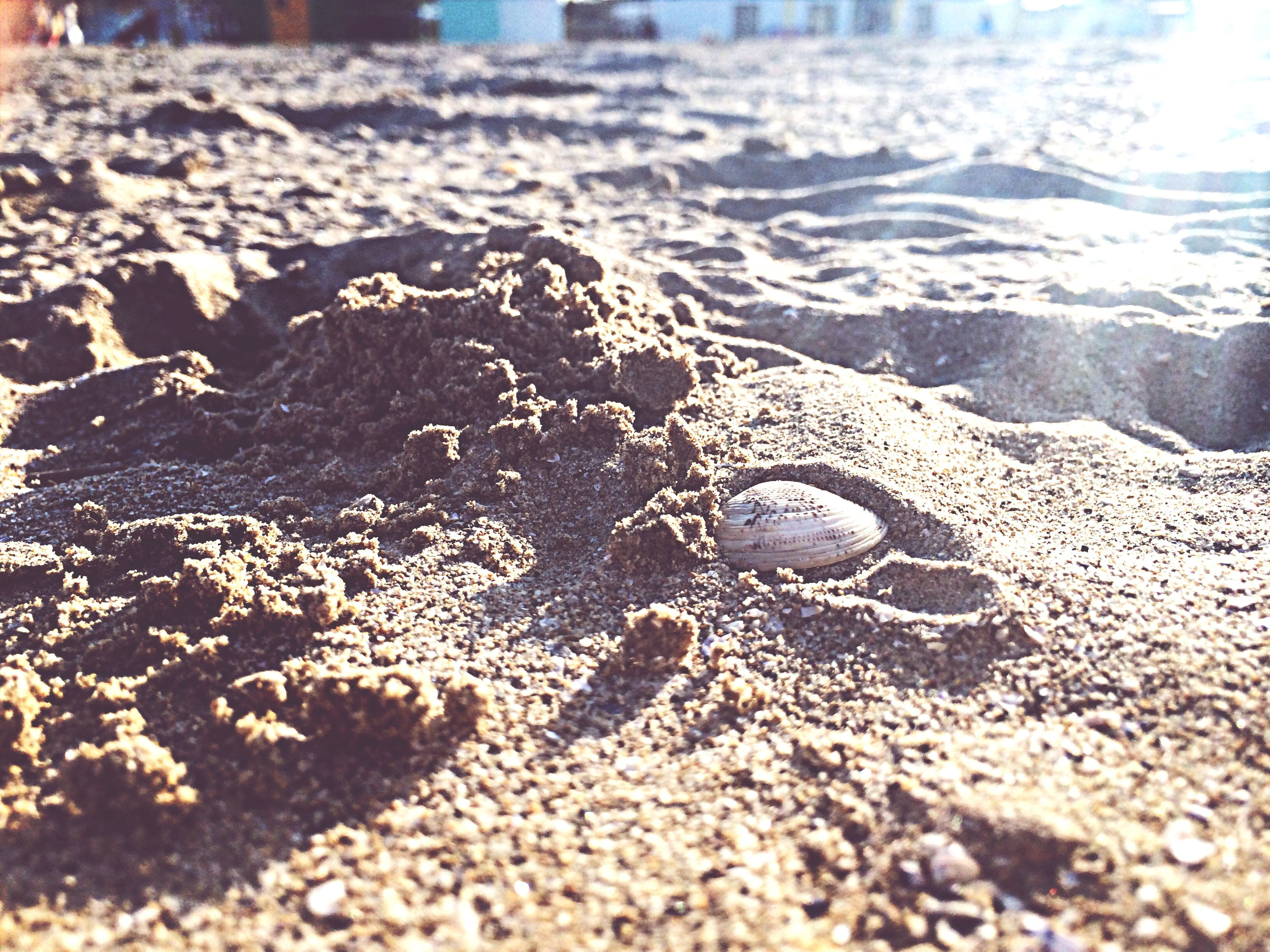beach, sand, water, shore, sea, wet, nature, surface level, pebble, close-up, stone - object, selective focus, tranquility, day, outdoors, sunlight, seashell, footprint, surf, no people