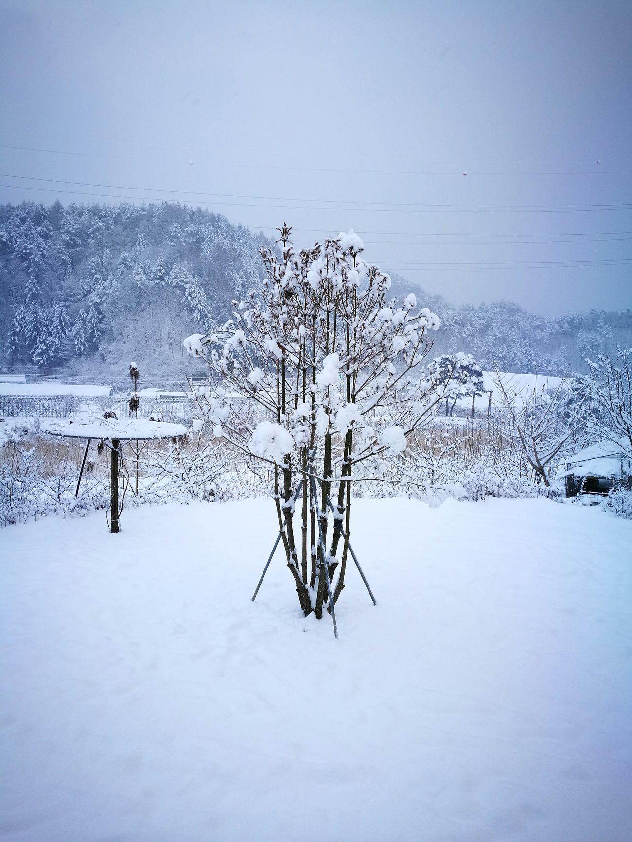 Snow Tree WHiTE WORLD