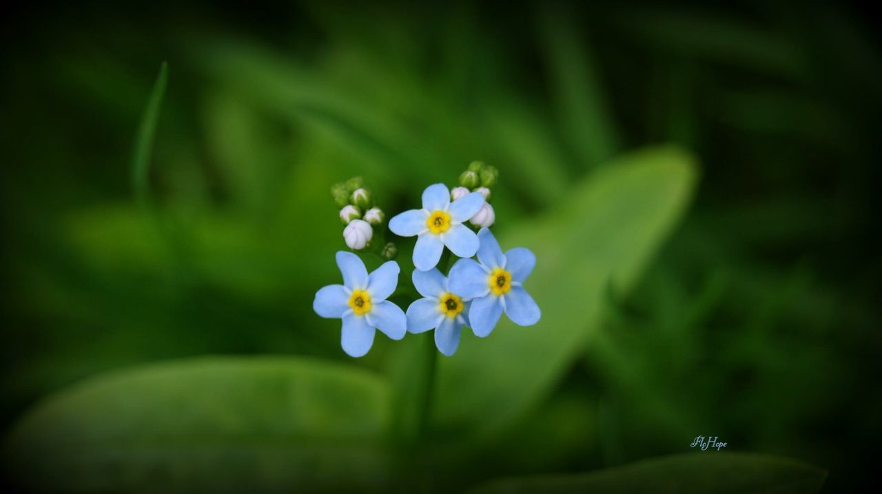 flower, fragility, nature, petal, beauty in nature, growth, blooming, freshness, flower head, focus on foreground, plant, outdoors, green color, day, no people, close-up, periwinkle