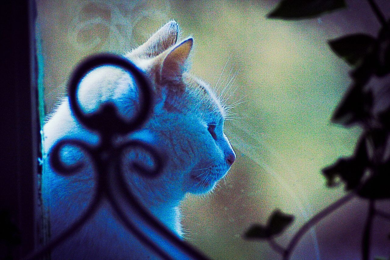 domestic cat, feline, close-up, mammal, animal themes, flower, pets, domestic animals, no people, day, indoors