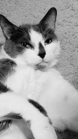 Beauty Redefined Blkandwht Cats 🐱 Blackandwhite Photography Pets Corner Cuddlebuddy Sweet Faces I Love My Cat ❤