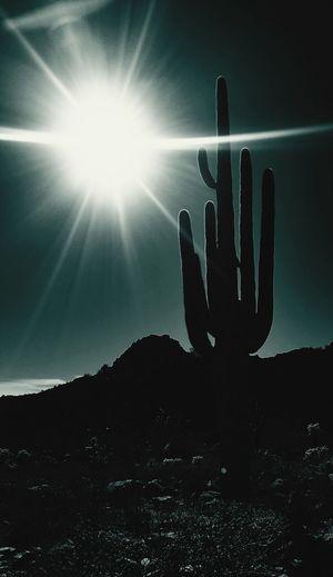 Desert Cactus DesertSky Outdoors Hiking Trail Wilderness Sistershouse Arizona Whitetankmountains BlackCanyon Loop Thanksgiving