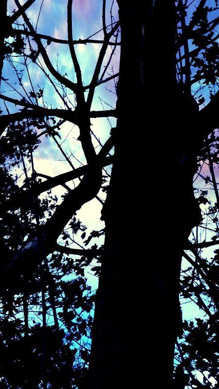 Polska Poland Poland 💗 Samsung Galaxy A5 Poland Gdańsk Tree Trunk Tree Drzewo