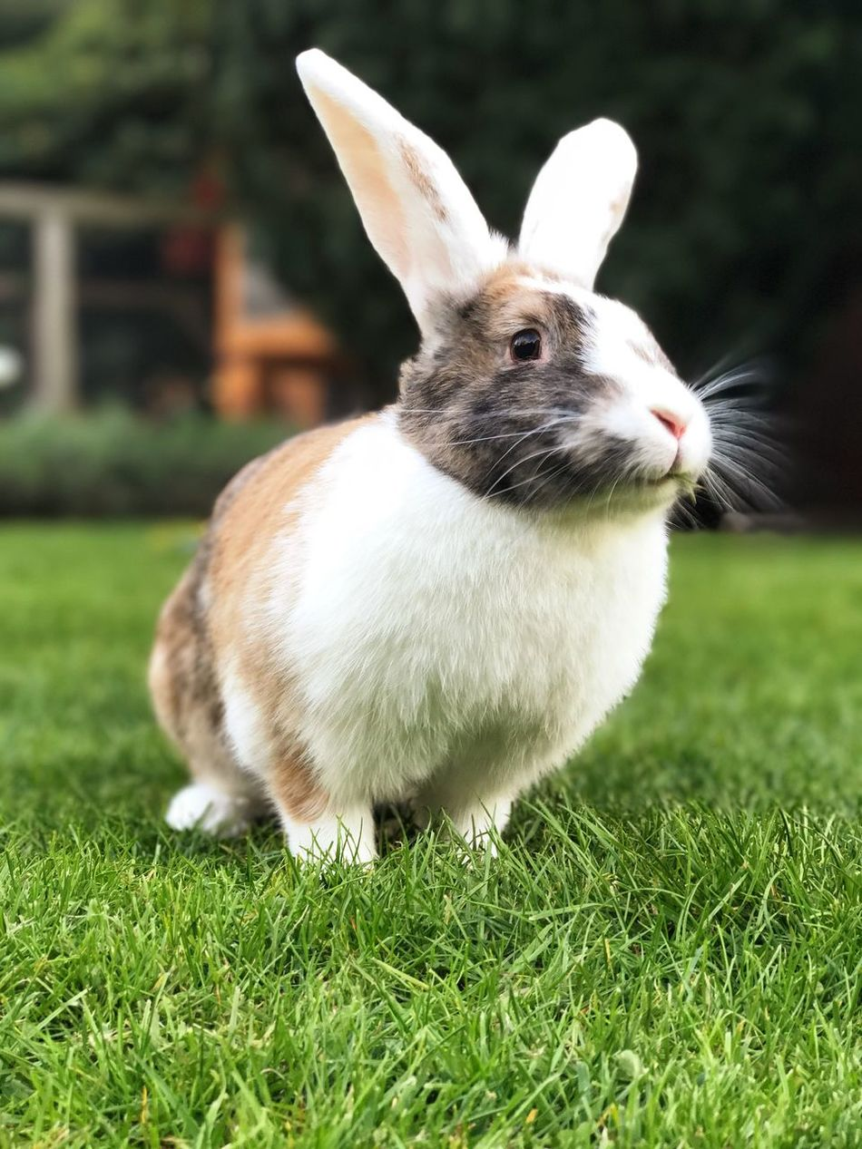 ❤️🐰 Rabbit ❤️ Grass Animal Themes One Animal Mammal Day Field Green Color Domestic Animals Outdoors Close-up Animals In The Wild No People Pets Nature Rabbits 🐇 Hasi IPhone7Plus EyEmNewHere