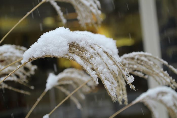 Shades Of Winter Winter Snow Cold Temperature Frozen White Color Close-up No People Outdoors Day Nature Snowflake