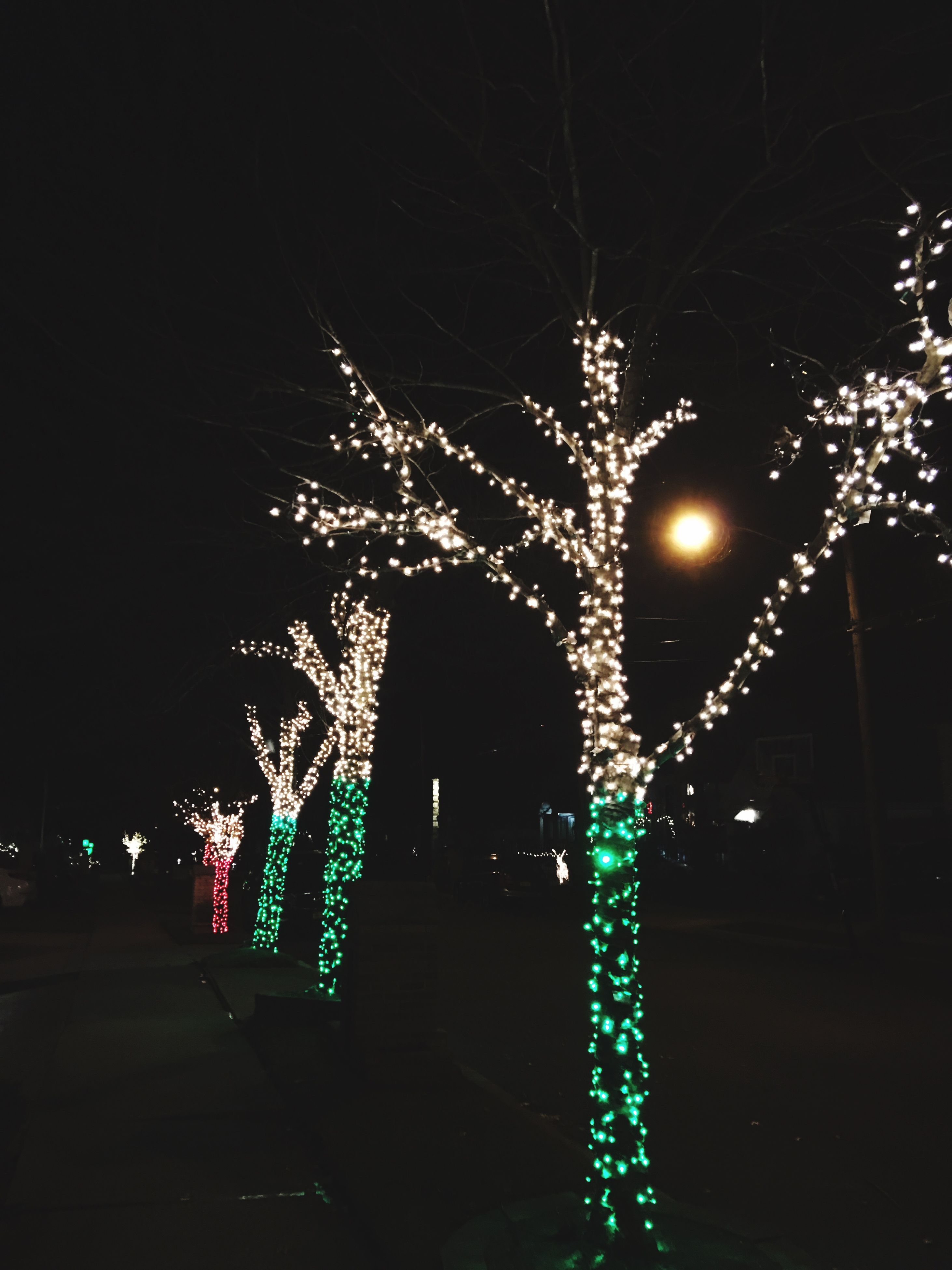 illuminated, night, celebration, christmas lights, lighting equipment, tree, no people, christmas, christmas decoration, christmas tree, outdoors, city, firework - man made object, sky, firework