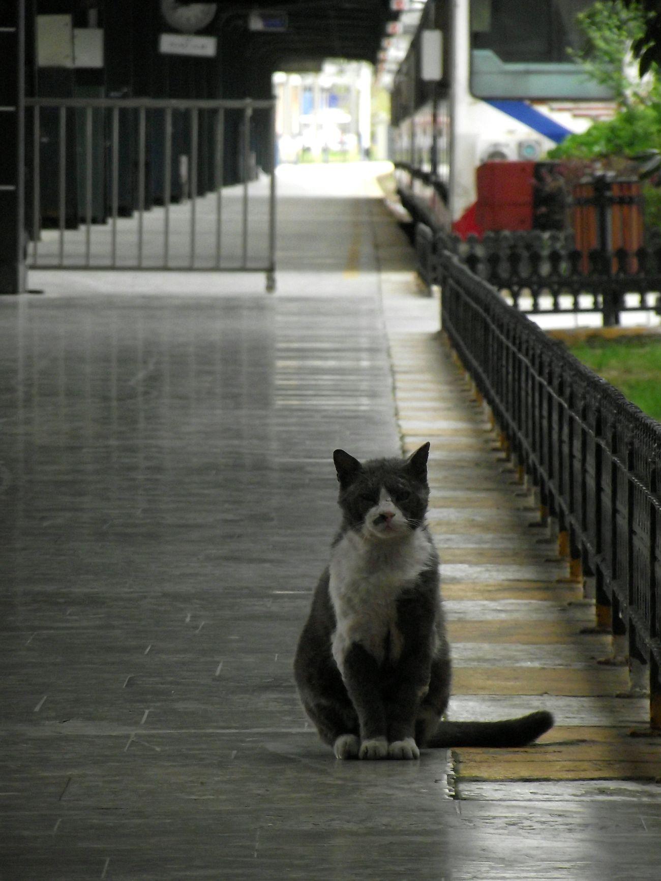 The Haydarpasa ' s cat 🎏 Cat Cats Of EyeEm Otogar Haydarpaşa Garı Haydarpaşatrenistasyonu Haydarpasa Train Station ıstanbul, Turkey