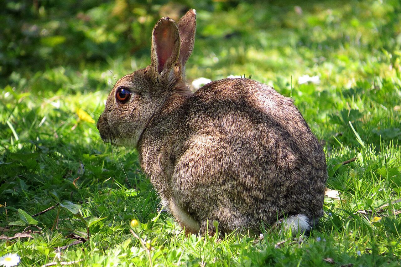 Beautiful stock photos of rabbit, Animal Themes, Animals In The Wild, Close-Up, Day