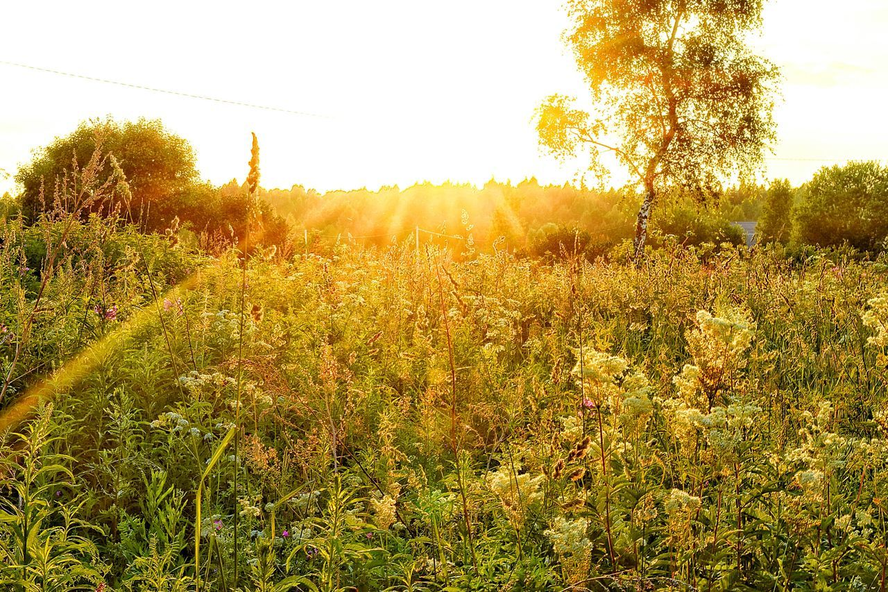 43 Golden Moments Sunset Nature Sunsetporn EyeEm Eye4photography  Nature_collection Naturelovers Sunsetporn Sunsetlover Sunset_captures Russia Walking Around Taking Photos Taking Pictures Great Light