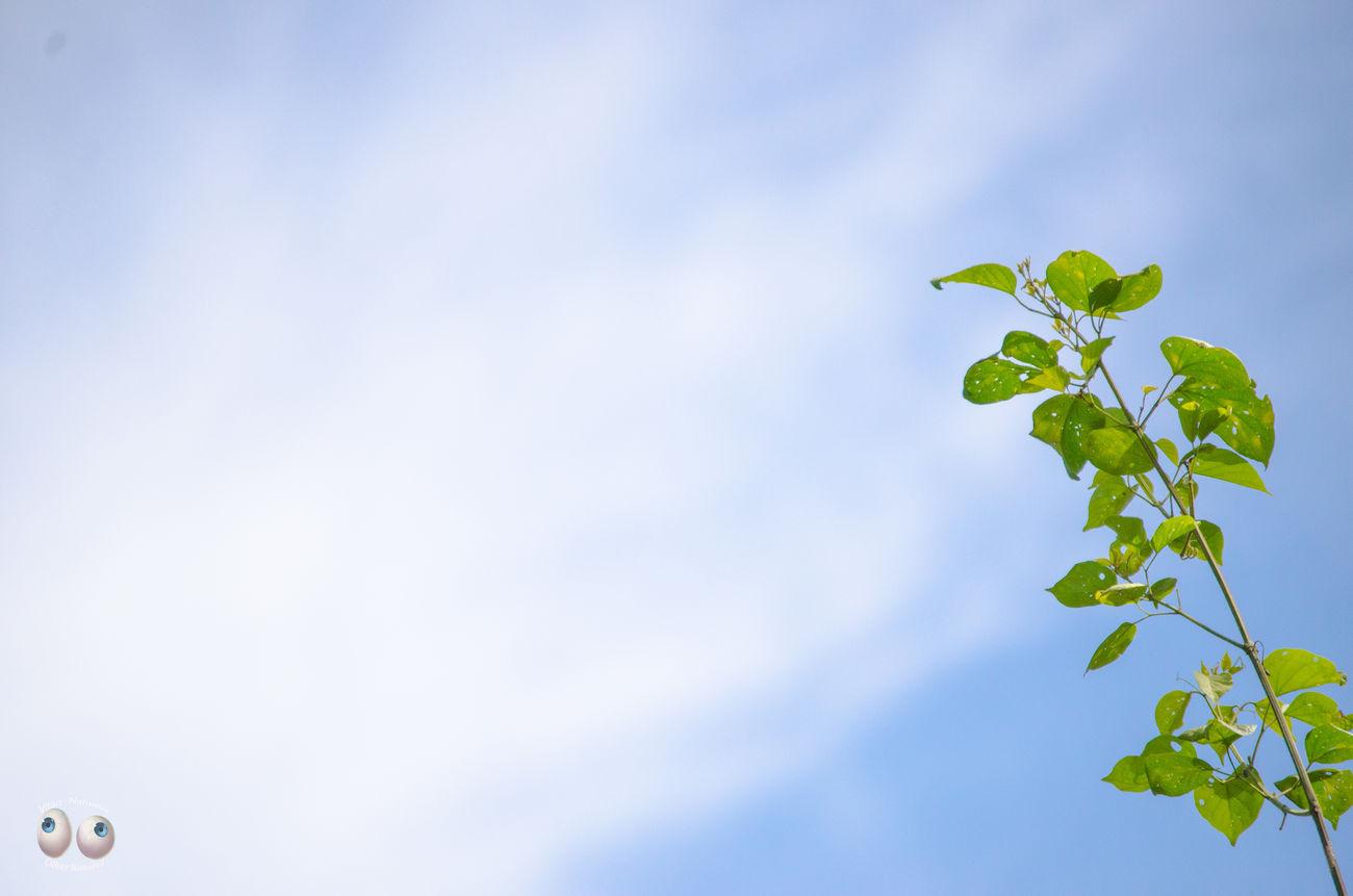 Terra  Natural Fotografia Fotografiaéarte Victornatureza Vitaonatureza Olharnatural Photography Nature Natureza Photoart Green Verde Azul Arte Phtographydocumentary