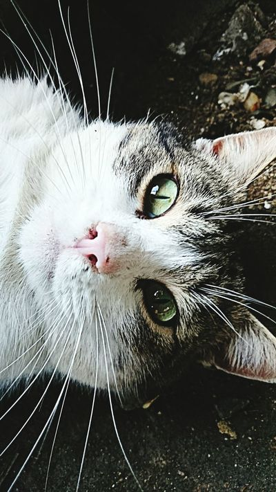Cat♡ Green Eyes Best Cat Ever Love This Cat šani ???❤❤