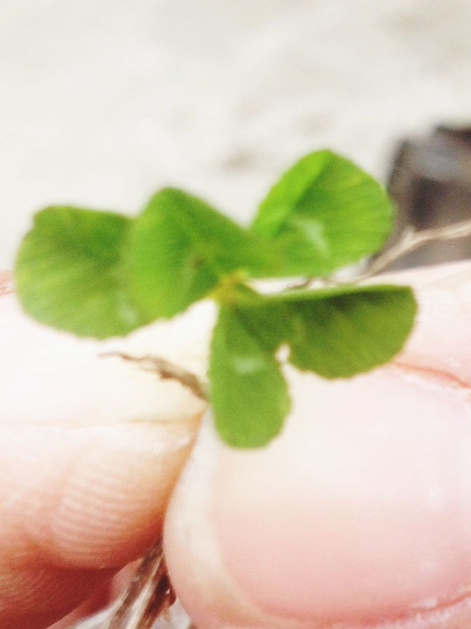 Check This Out 5 leaf clover. How Lucky ?