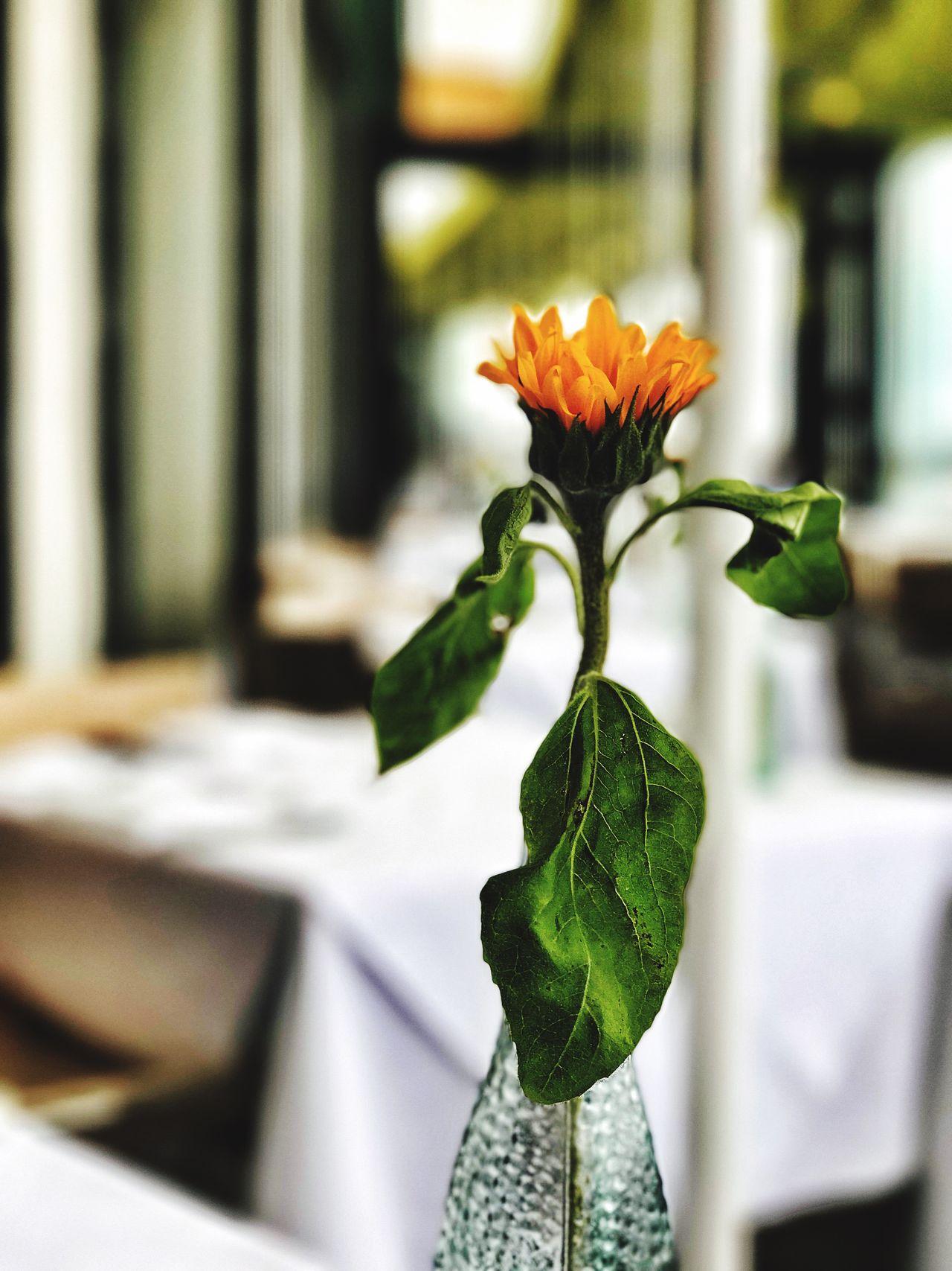 Flower Indoors  Close-up Hotel