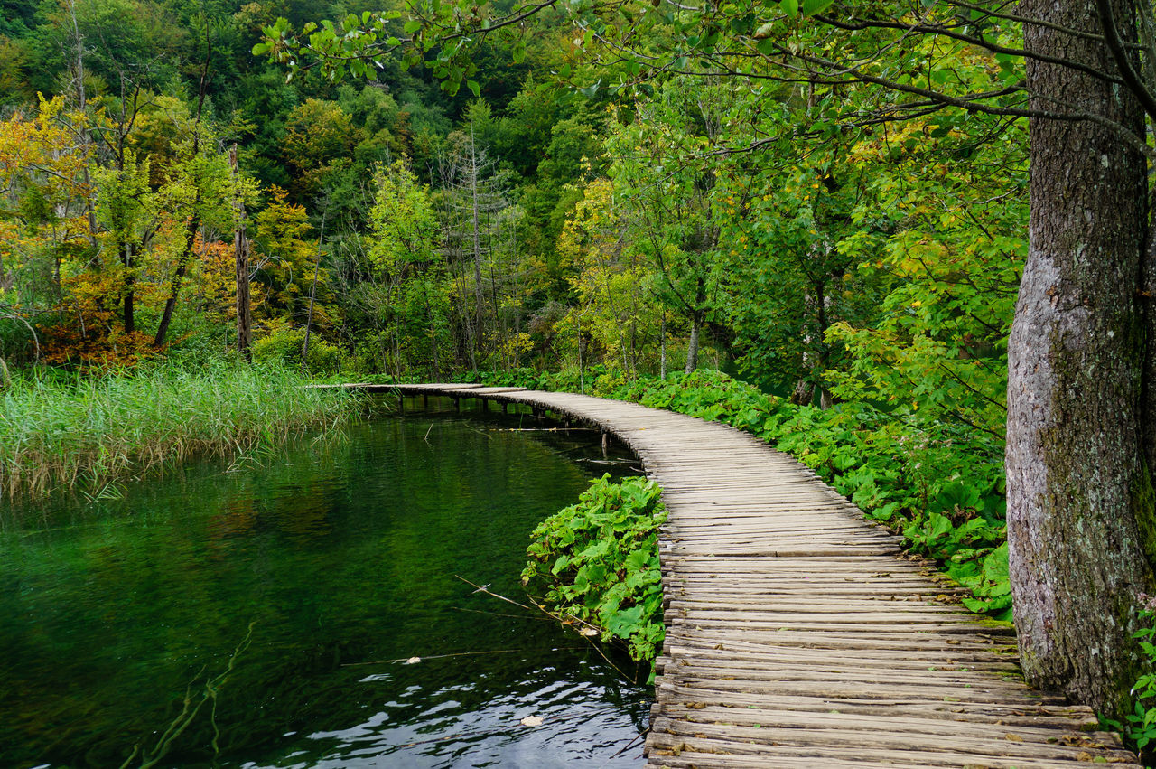 Plitvice Lakes National Park Beauty In Nature Day Forest Green Color Growth Lake Nature No People Outdoors Scenics Tranquil Scene Tranquility Tree Water