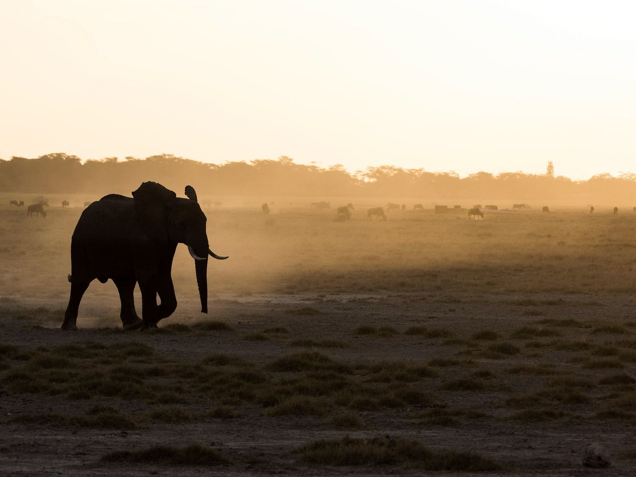 Beautiful stock photos of elephant, Animal Themes, Animal Wildlife, Animals In The Wild, Clear Sky