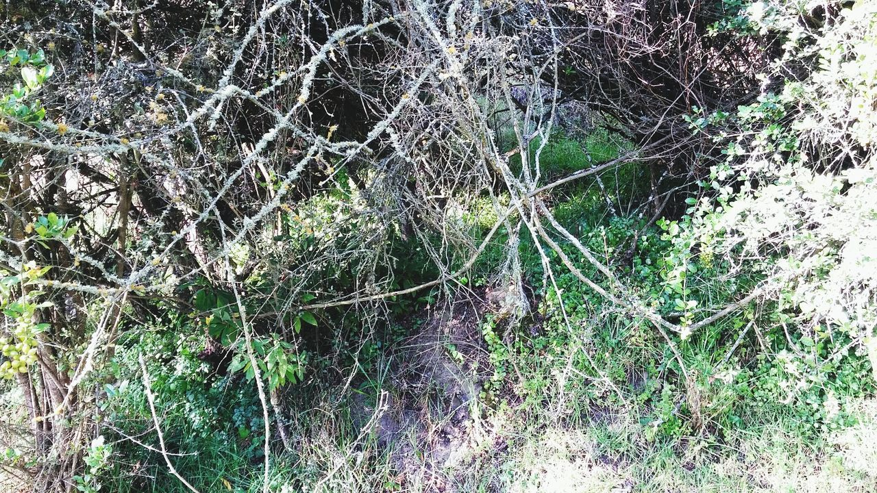 Cueva Cueva Full Frame Nature Growth No People Backgrounds Close-up Tree Plant Low Angle View Green Color Outdoors Day Beauty In Nature Fragility Spider Web Ivy Web