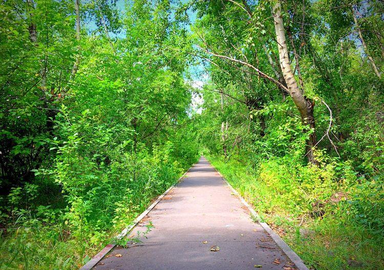 Nature Green Color Plant Summer No People Krasnoyarsk