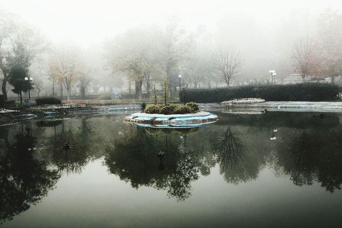 Mirroring the fog