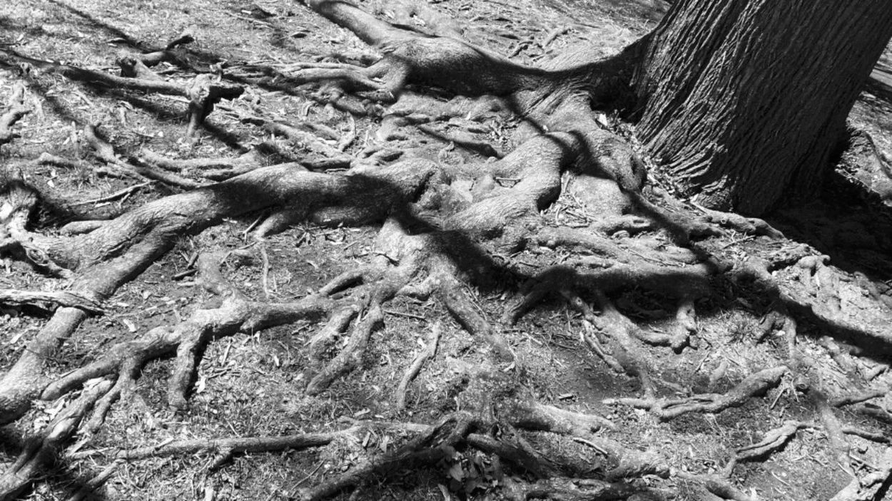 Tree Roots  Back To The Roots RootsVibe Black And White Photography OpenEdit Open Edit Light And Shadow TreePorn