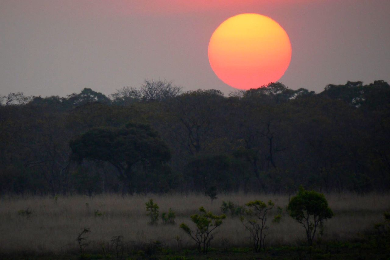 African Bush Atmosphere Beauty In Nature Idyllic Majestic Nature No People Non-urban Scene Outdoors Remote Romantic Sky Safari Scenics Sun Sundowners Sunset Tranquil Scene Tranquility Tree