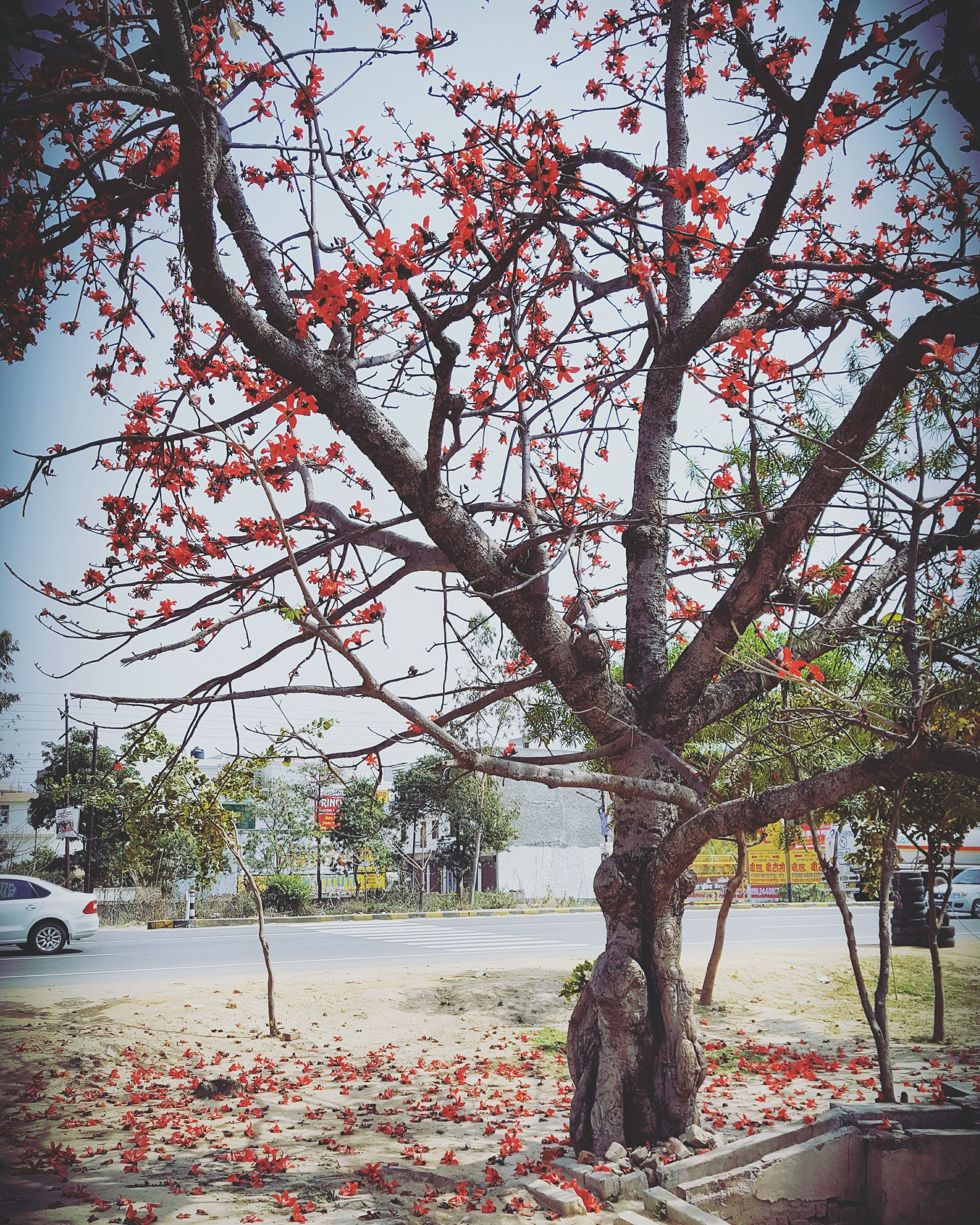 tree, nature, water, growth, outdoors, no people, beauty in nature, branch, day, sky, scenics