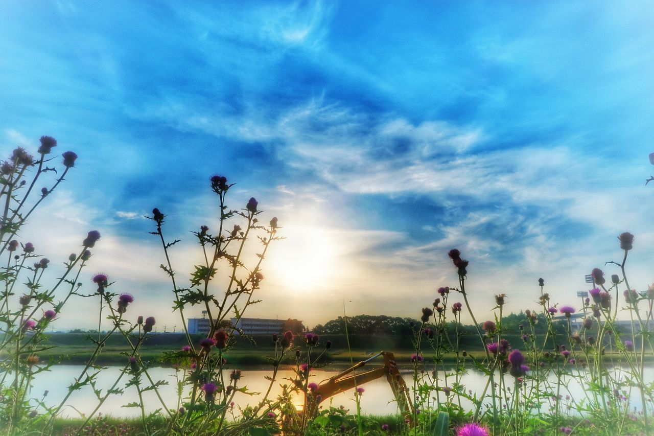 growth, flower, nature, plant, beauty in nature, sky, field, tranquility, outdoors, no people, day, freshness, grass, fragility, close-up