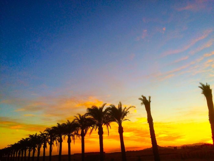 Sunset in Egypt. Sunset Scenics Beauty In Nature Tranquil Scene Sky Palm Tree Orange Color Cloud - Sky No People Cloud And Sky Cloud Formations Blue Sky Yelllow The Great Outdoors - 2017 EyeEm Awards Space VOID Orange Growth EyeEm Best Shots
