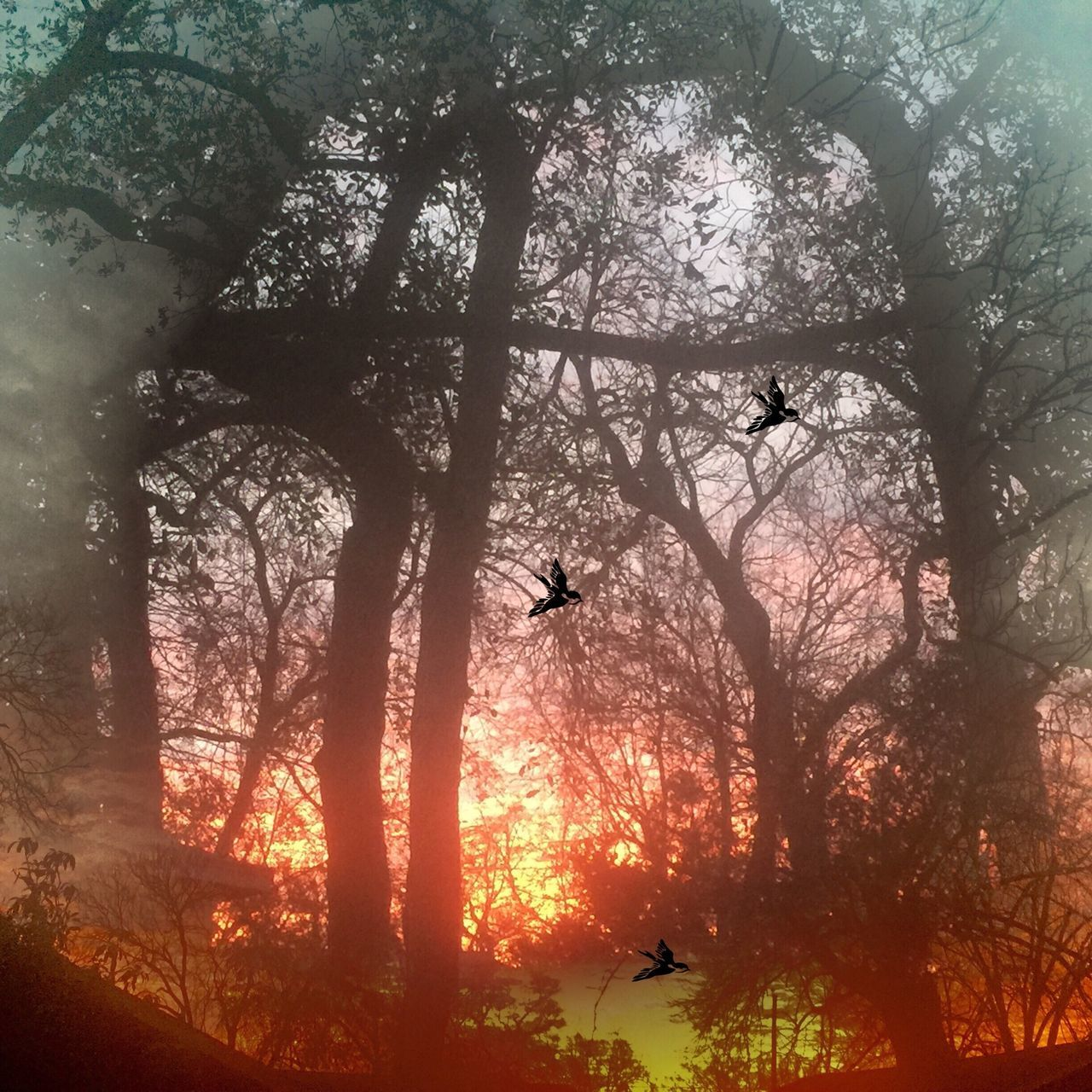 Even though we may be experiencing one of those wilderness experiences, if we keep looking up we will find His light. Sun_collection, Sky_collection, Cloudporn, Skyporn The Moment - 2015 EyeEm Awards Light Up Your Life Art Inspired By Life The Great Outdoors - 2015 EyeEm Awards EyeEm Best Shots Enjoying The Sun No Edit No Fun Tadaa Friends Streamzoo Family For My Friends That Connect The EyeEm Facebook Cover Challenge Creative Light And Shadow EyeEm Best Shots - Landscape EyeEm Masterclass Myuniquestyle Sunrise_sunsets_aroundworld Sky And Trees Looking To The Other Side Lookingup Huggingatree  Tree Hugger Eye4photography  CreativePhotographer From Where I Stand