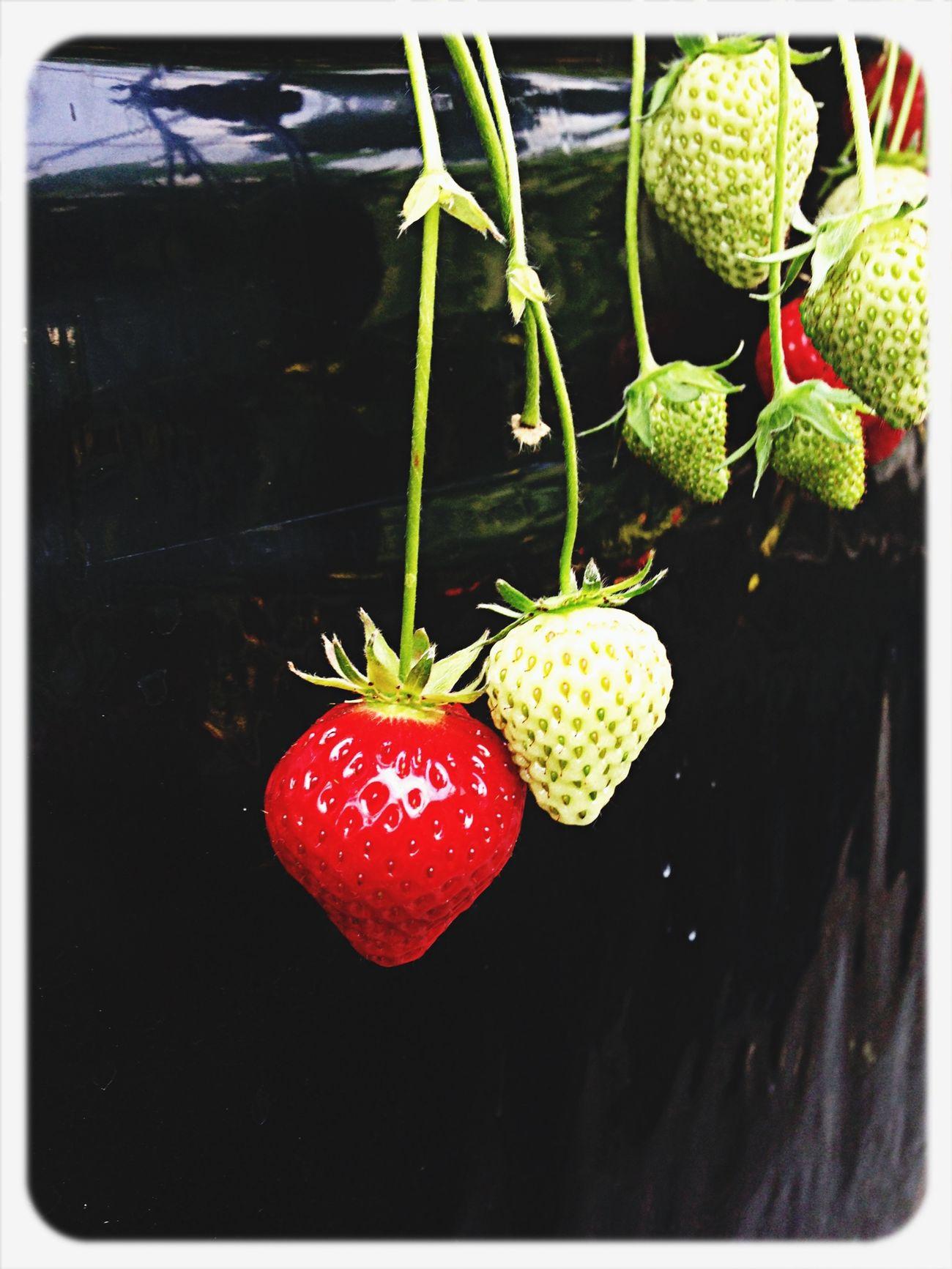 Hello World Photography Enjoying Life Strawberry
