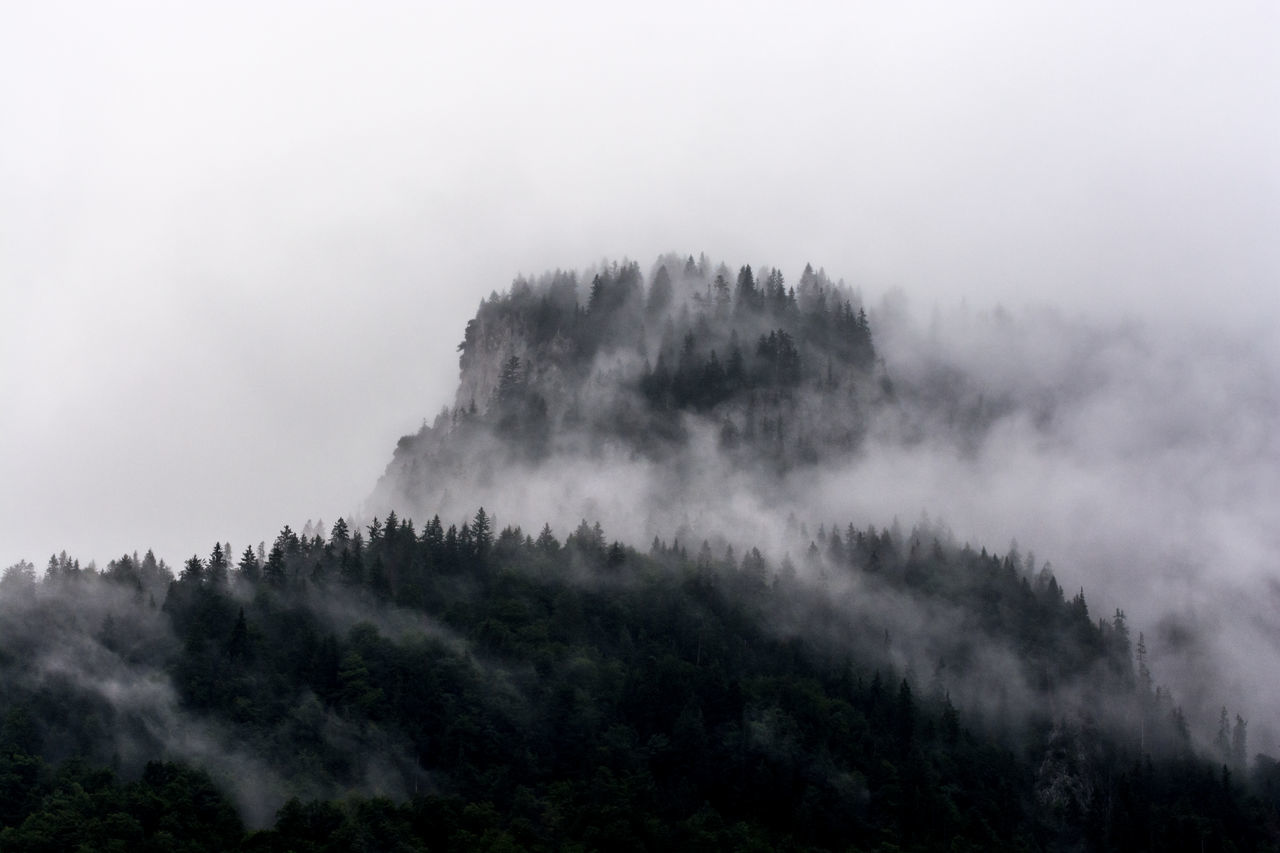Foggy days ... Mystic beauty in Nature cloud - sky day fog foggy day forest hazy landscape mist mountain mystical mystical atmosphere Nature no people outdoors pine tree power in nature scenics sky tranquil scene Tranquility Tree