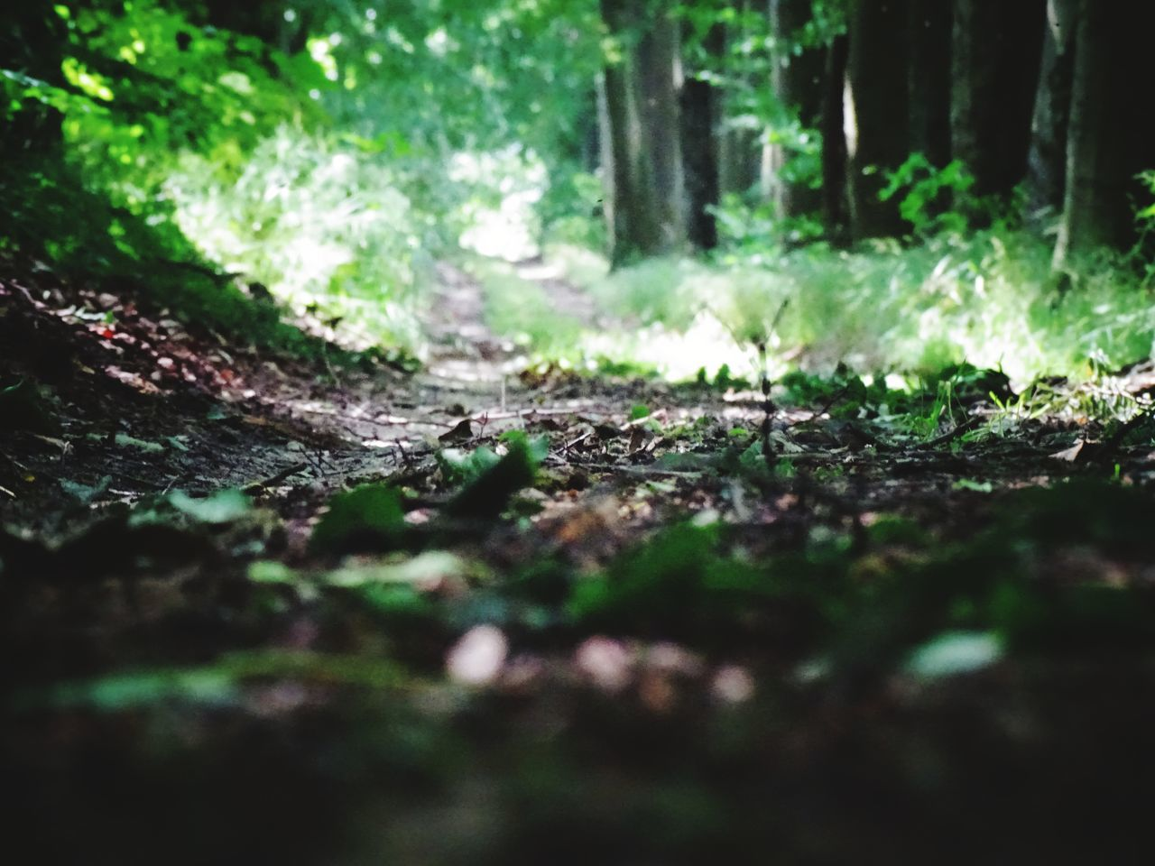 forest, nature, selective focus, tranquility, day, no people, tree, outdoors, growth, tree trunk, beauty in nature, close-up