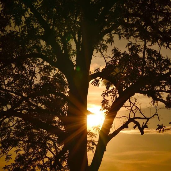 Sunset on the farm Tree Branch Sunset Silhouette Sun Low Angle View Sunbeam Sunlight Tree Trunk Beauty In Nature Scenics Nature Tranquility Tranquil Scene Sky Outdoors Back Lit Orange Color Lens Flare Sunsets Kewanee Illinois